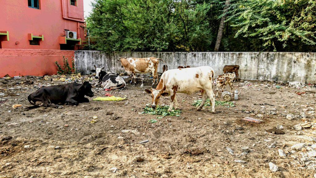 (2)南インド・タミルナードゥ州への旅~2日目(5月20日)