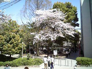華やぐ大学のキャンパス~♪