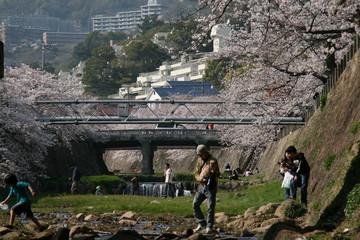 季節はずれの芦屋の桜~♪