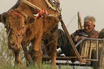 『牛の鈴音』、丑年の2009年を締めくくるにふさわしい映画~